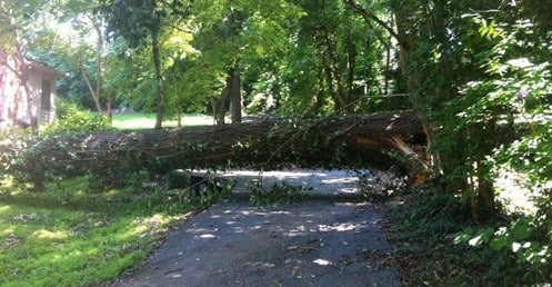 Southeast Tree is available for Emergency Tree Services in Roswell, GA