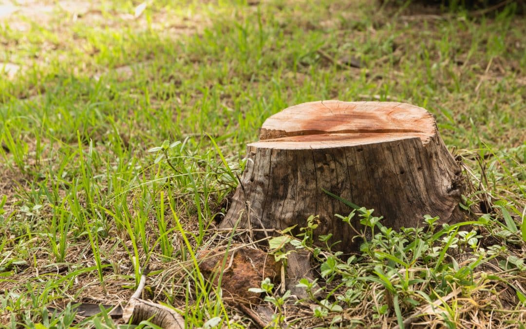 How to Remove a Tree in Line With a Cobb County, GA Tree Ordinance