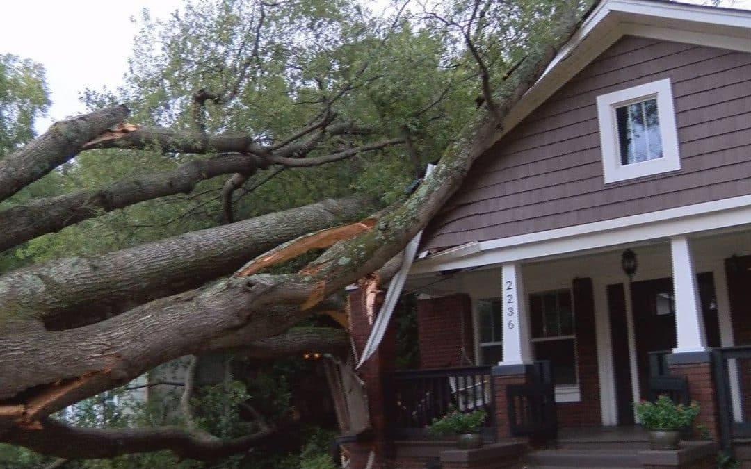 Tree Removal Permit Sandy Springs, GA