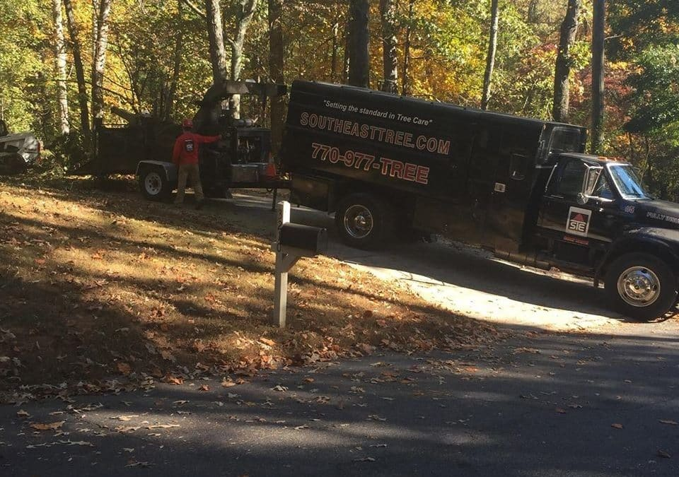 SoutheastTree Services Buckhead Area With Expert Tree Service