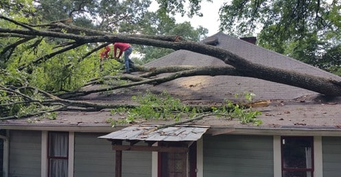 SoutheastTree Offers Affordable Tree Services in Alpharetta, GA