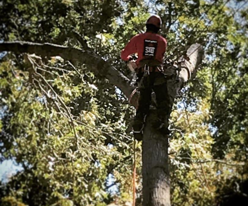 Roswell GA Arborist Offers Spring Pruning Services