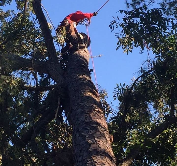 Alpharetta Arborist Shares Tree Pruning Tips for Fall
