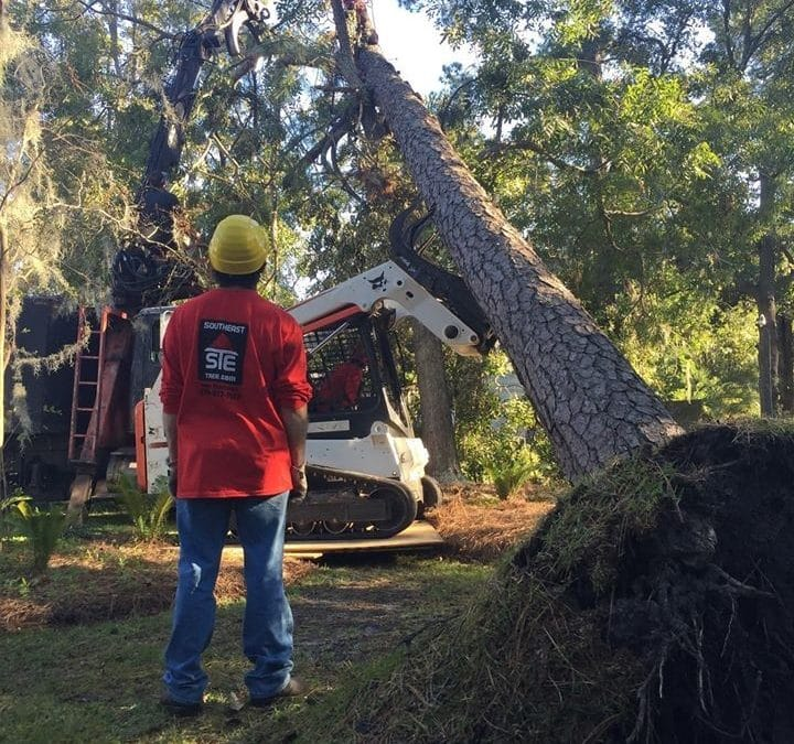 Tree Service Experts In Sandy Springs GA Offer Expert Tree Removal