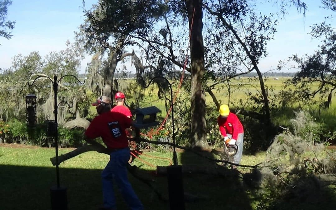 SoutheastTree Offers Insights into Tree Care Safety