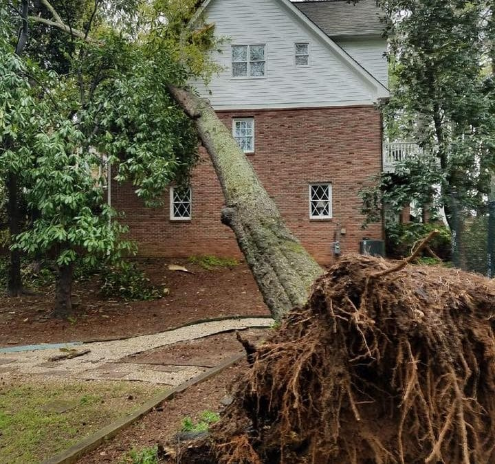 Tree Removal Permit Roswell, GA: City of Roswell Tree Ordinance