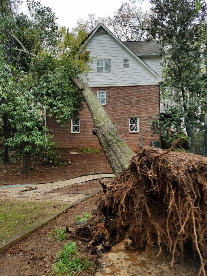 Tree Removal Permit Roswell GA